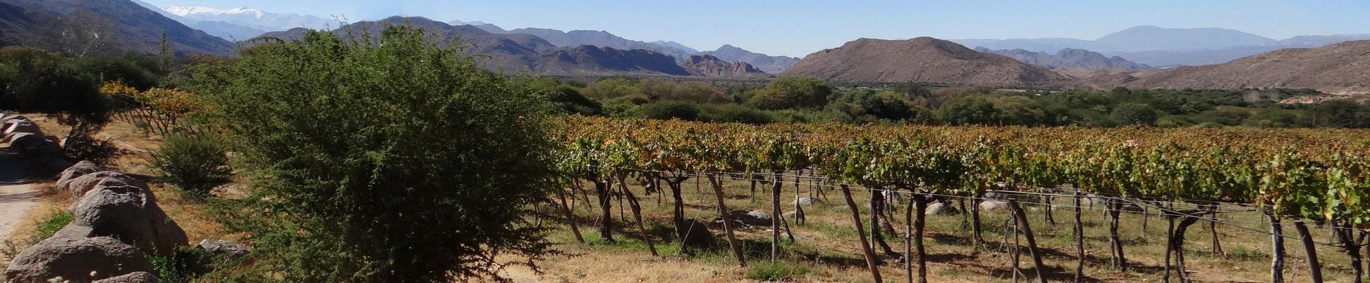 vineyard01